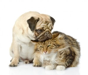 Pet friendly Apartments in conroe